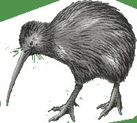 FORT kiwi nu